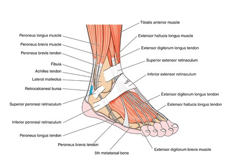 san_jose_ca_foot_ankle_podiatrist_foot_orthotics-16